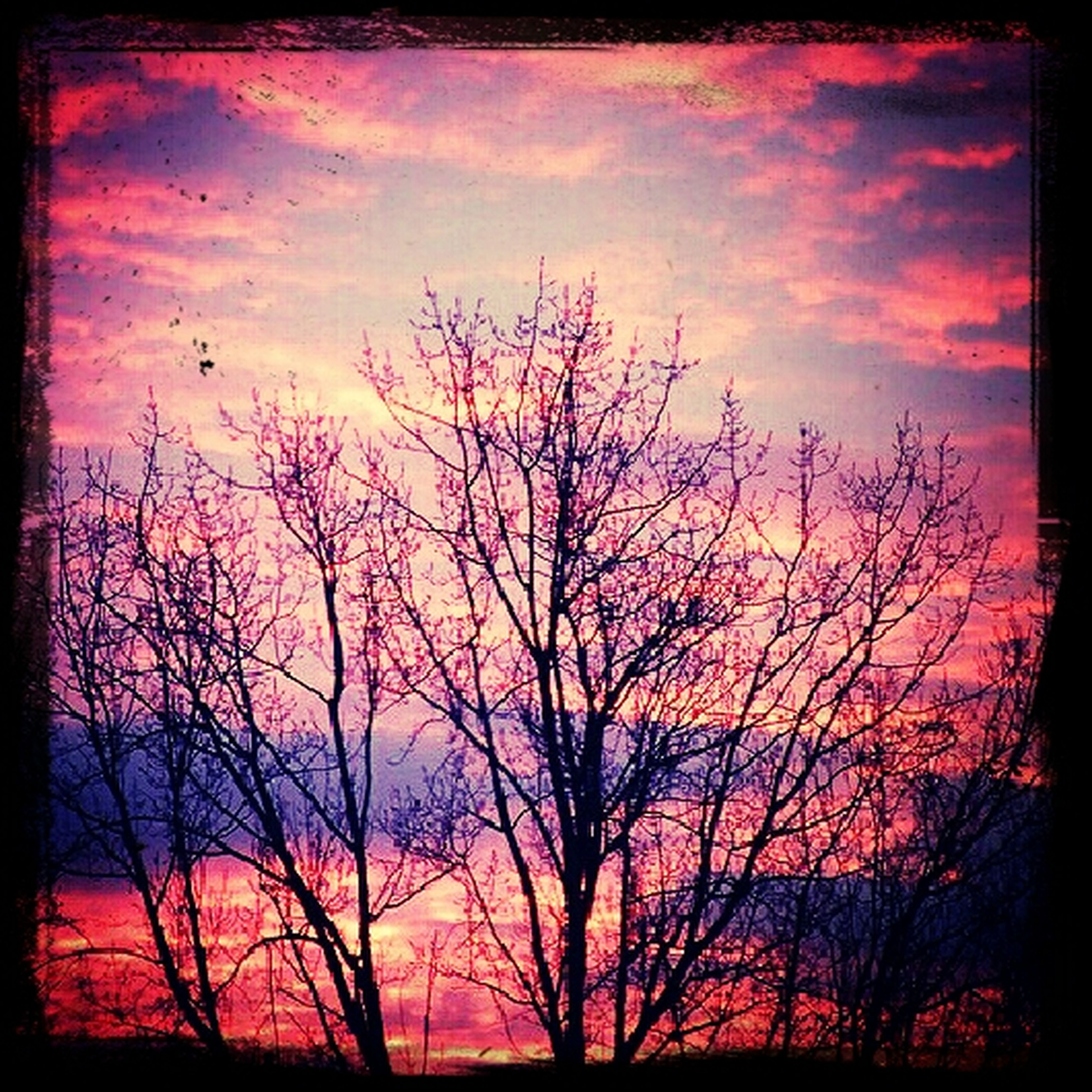 sunset, silhouette, bare tree, transfer print, tree, sky, orange color, auto post production filter, branch, beauty in nature, scenics, tranquility, low angle view, tranquil scene, cloud - sky, nature, dramatic sky, idyllic, cloud, dusk