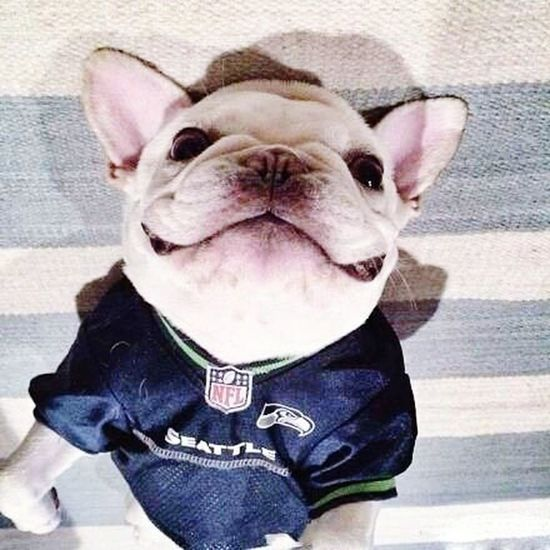 Seattle Football Americano NFL Football Super Bowl Followme Cute♡ Cute Pets
