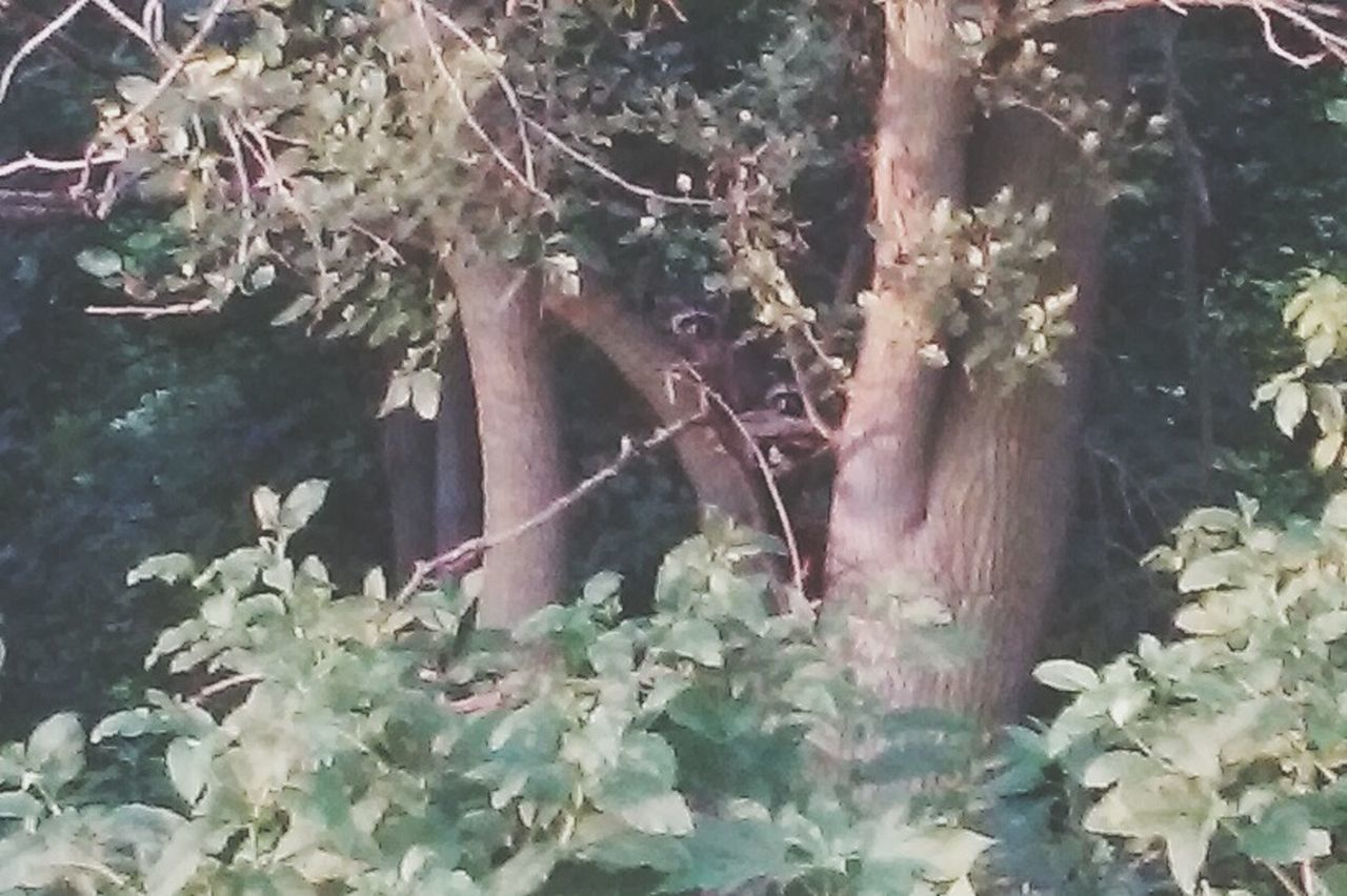 Baby Raccoons The Great Outdoors - 2015 EyeEm Awards I See You!