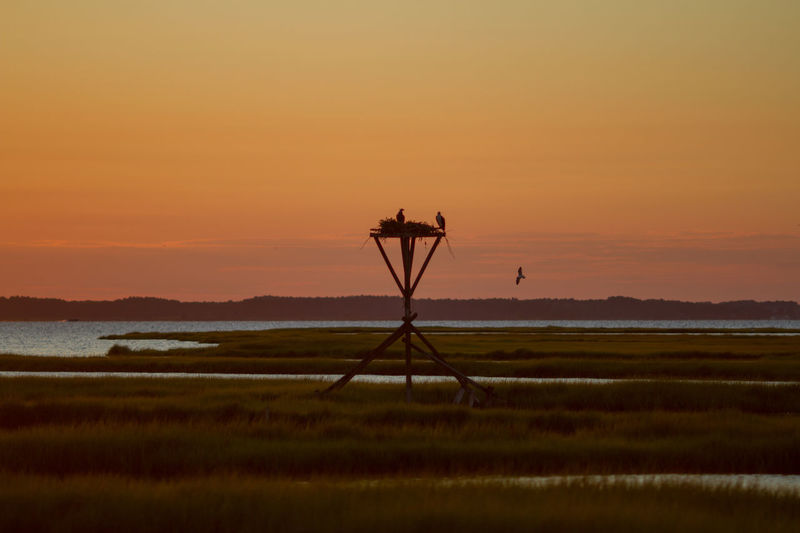 Assawoman Bay Bay Coastline Conservation Delmarva Dusk Environmental Conservation Eric Barnes Photography Horizon Over Water Maryland Nature Ocean City Outdoors Silhouette Sky Sunset Wat Wetlands How Do We Build The World? Landscapes With WhiteWall Here Belongs To Me The Great Outdoors With Adobe