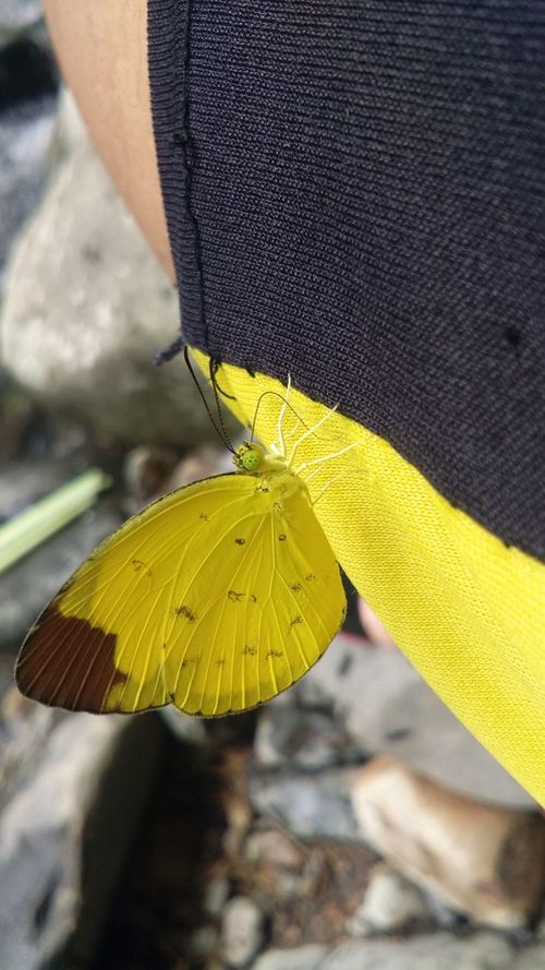 Yellow butterfly love My Pants  BeutifulButterFly Yellow Color 😎Cool