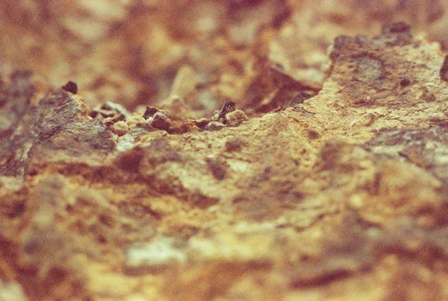 フィルム Olympus Om10 Overduefilm Getting Inspired Retouch Memory Yellow Rock Textures And Surfaces Stone Yellowstone Wildlife & Nature Better Look Twice Showcase: January Photographic Memory The KIOMI Collection Showing Imperfection