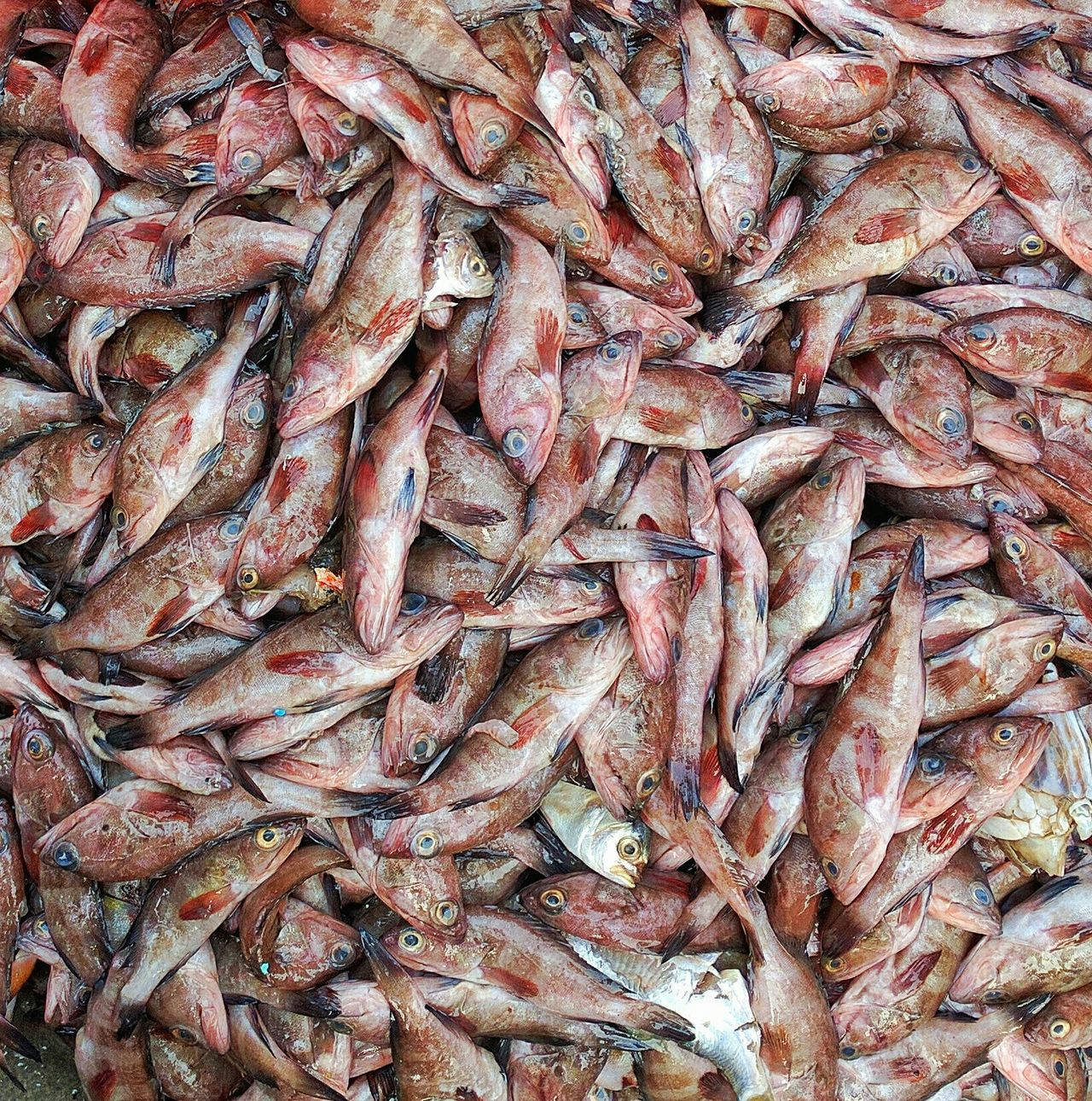 Fish Market Fish For Sale Fish Formation Fish DEAD FISH Mumbai Princess Docks Bhau Cha Dhakka