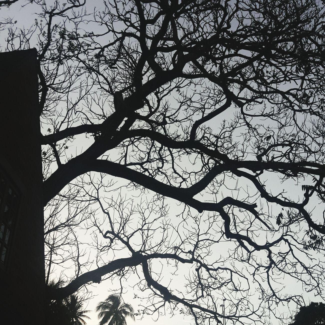 Veracruz,México Trees And Nature Outdoors Night Branch Growth No People Sky Tree