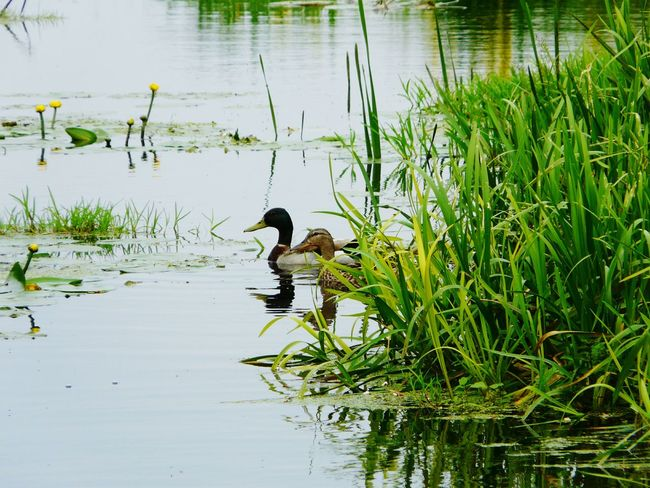 Nature On Your Doorstep Animals Somerset Levels Uk Summer Memories Taking Photos