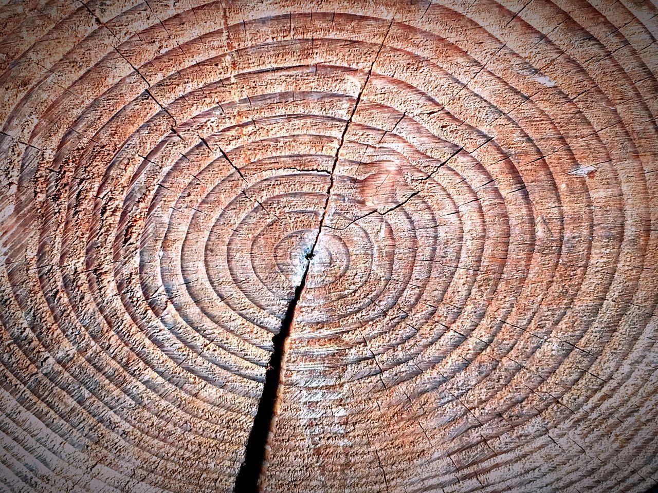 EyeEm Nature Lover Tree Trunk Tree Miracel Aged Aging Process