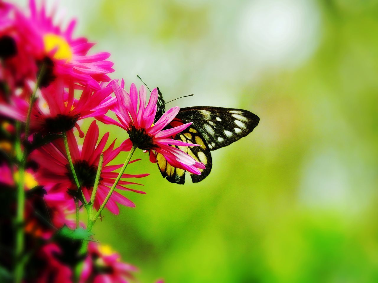 Flower Fragility Insect Nature Beauty In Nature One Animal Plant Freshness Animal Themes (null) Close-up Focus On Foreground Growth Animals In The Wild Outdoors Flower Head Butterfly - Insect No People Day Pollination