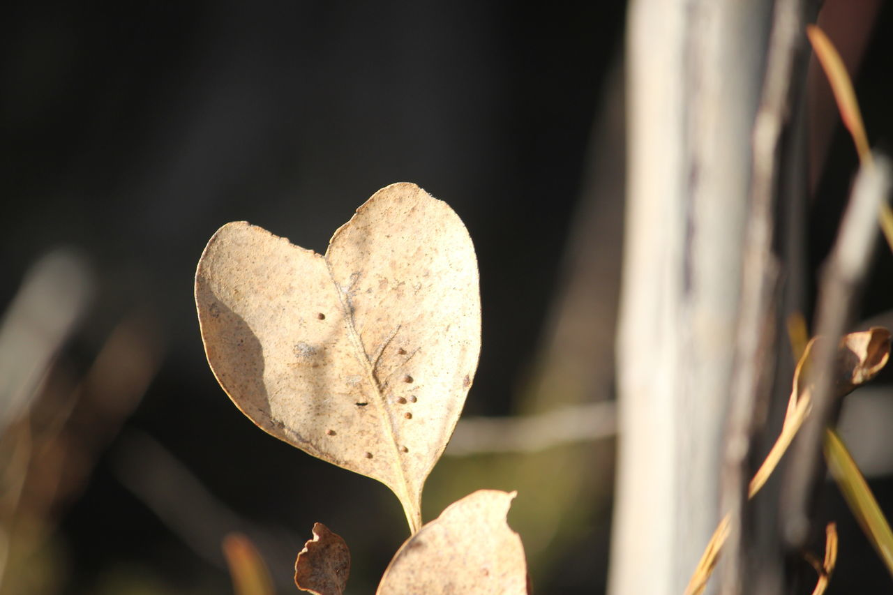 heart shape, love, nature, close-up, focus on foreground, plant, fragility, outdoors, leaf, day, beauty in nature, no people