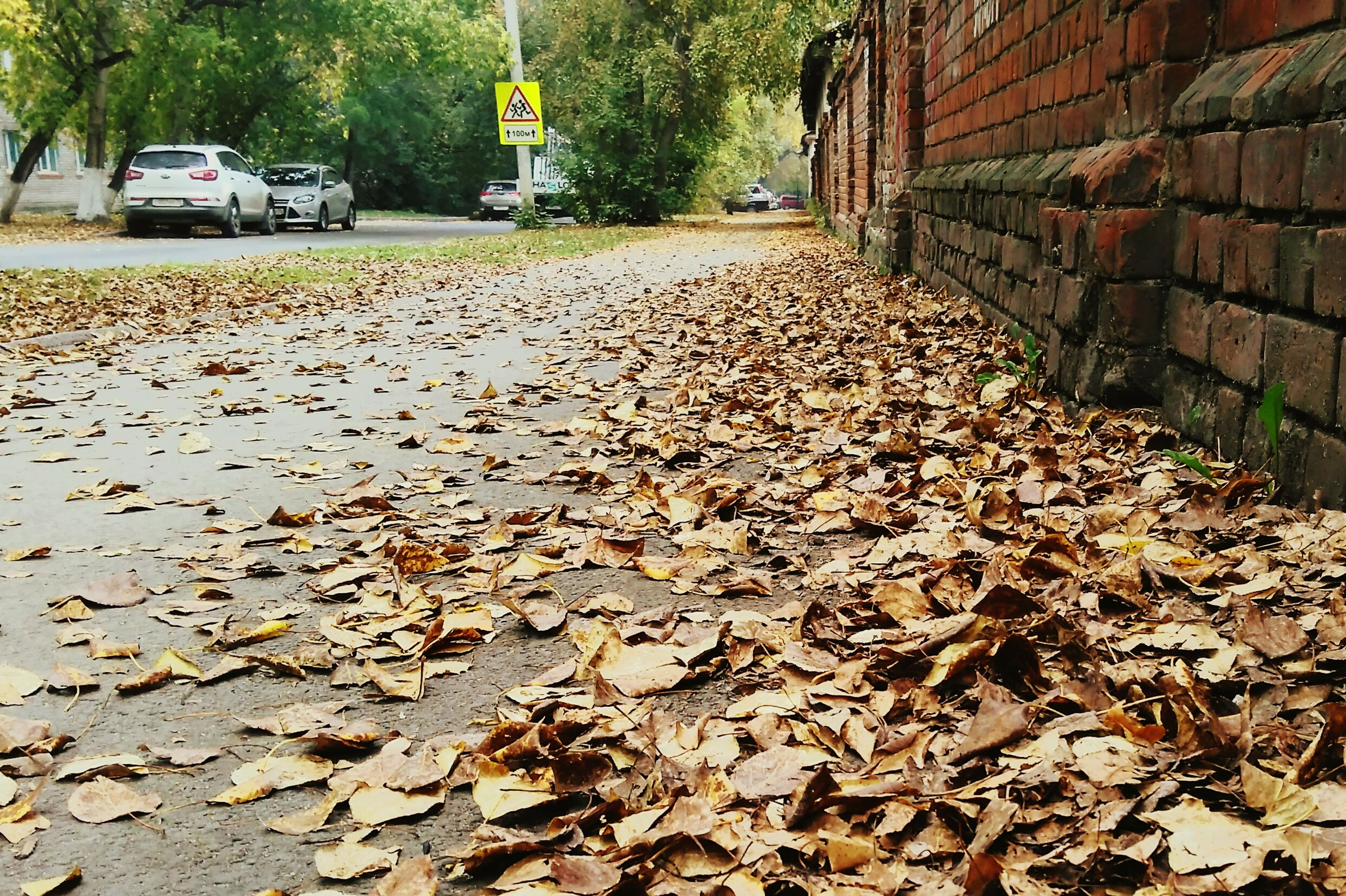 leaf, autumn, season, dry, transportation, change, street, fallen, car, land vehicle, road, leaves, mode of transport, surface level, day, the way forward, building exterior, outdoors, fragility, natural condition, abundance, fallen leaf, footpath