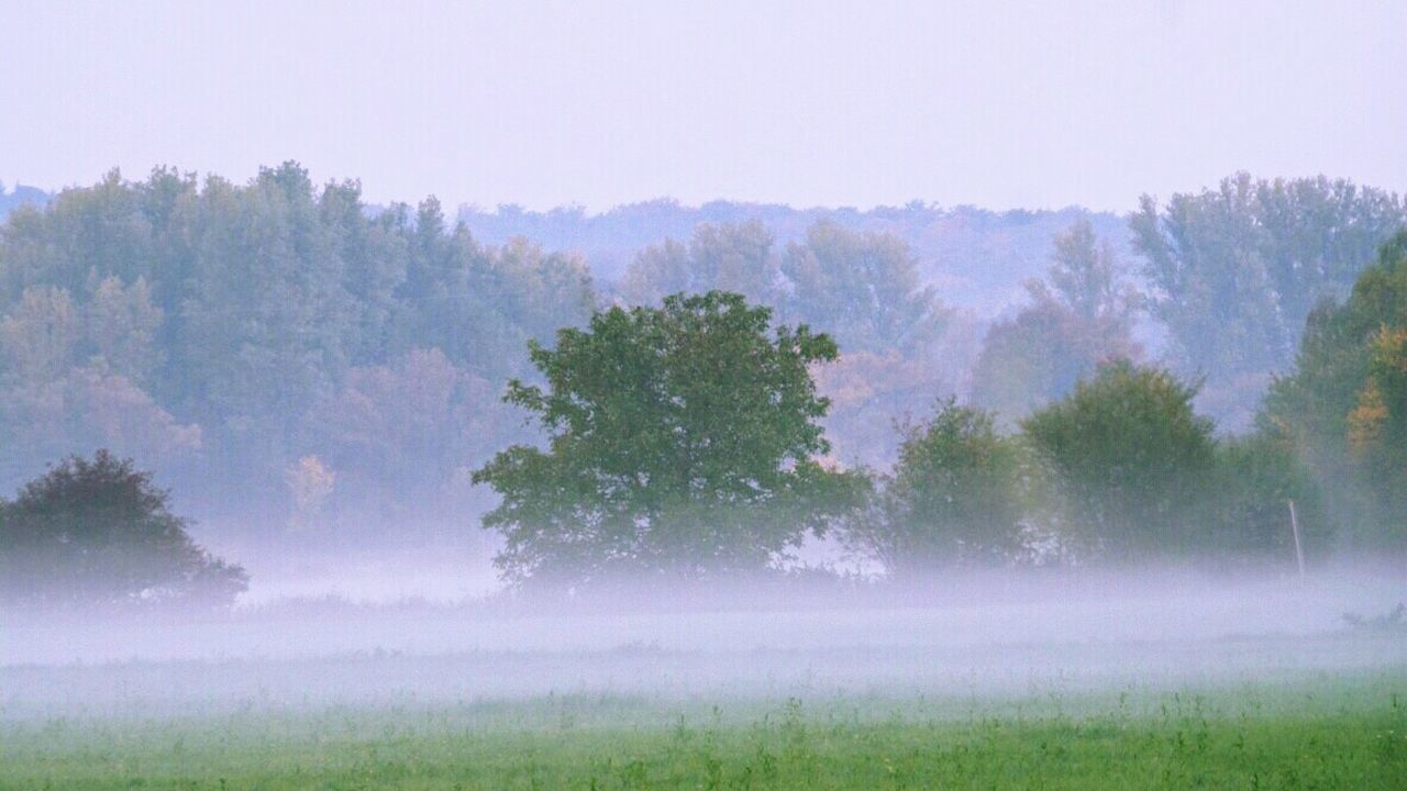 about half an hour before sunset soft floating groundfog spreaded the meadows Fog Fog In The Trees Nature Melancholic Landscapes Naturephotography Natural Beauty Nature Impressionism Landscape_Collection Autumn Die Kinzig-Auen The Great Outdoors With Adobe
