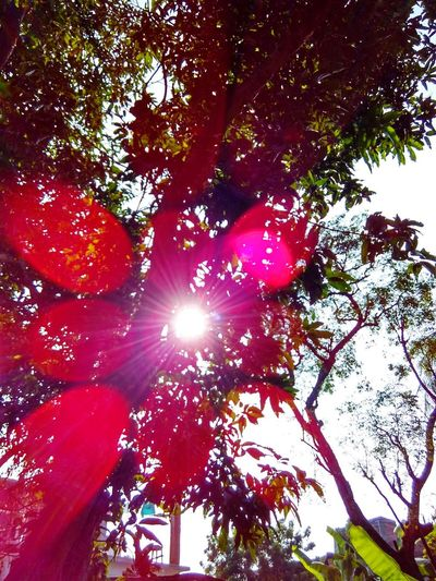 Reflaction Colorful_tree Sun Tree Nice Day Goodshot