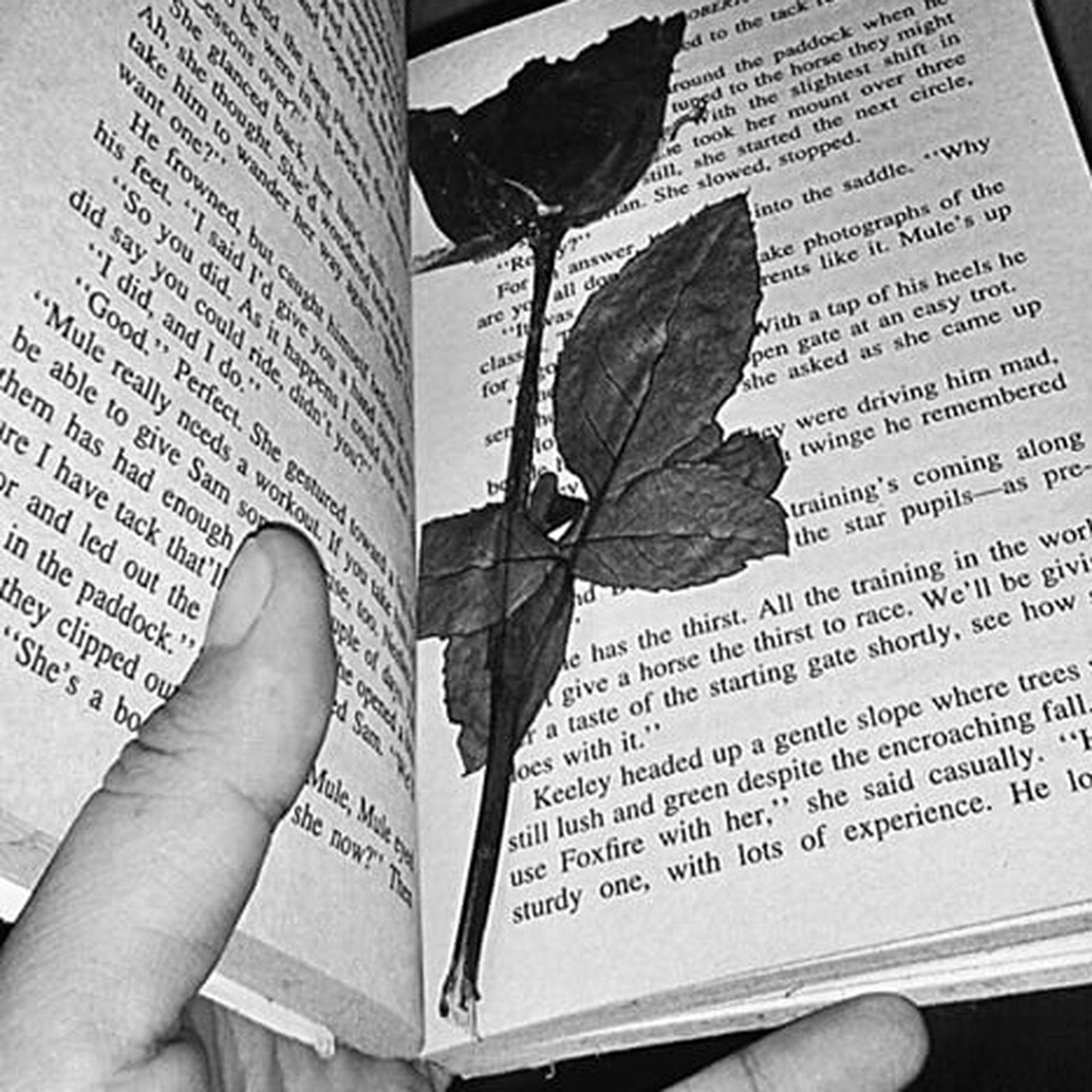 You gave me roses and I left them there to die. Beautiful Memories Treaured
