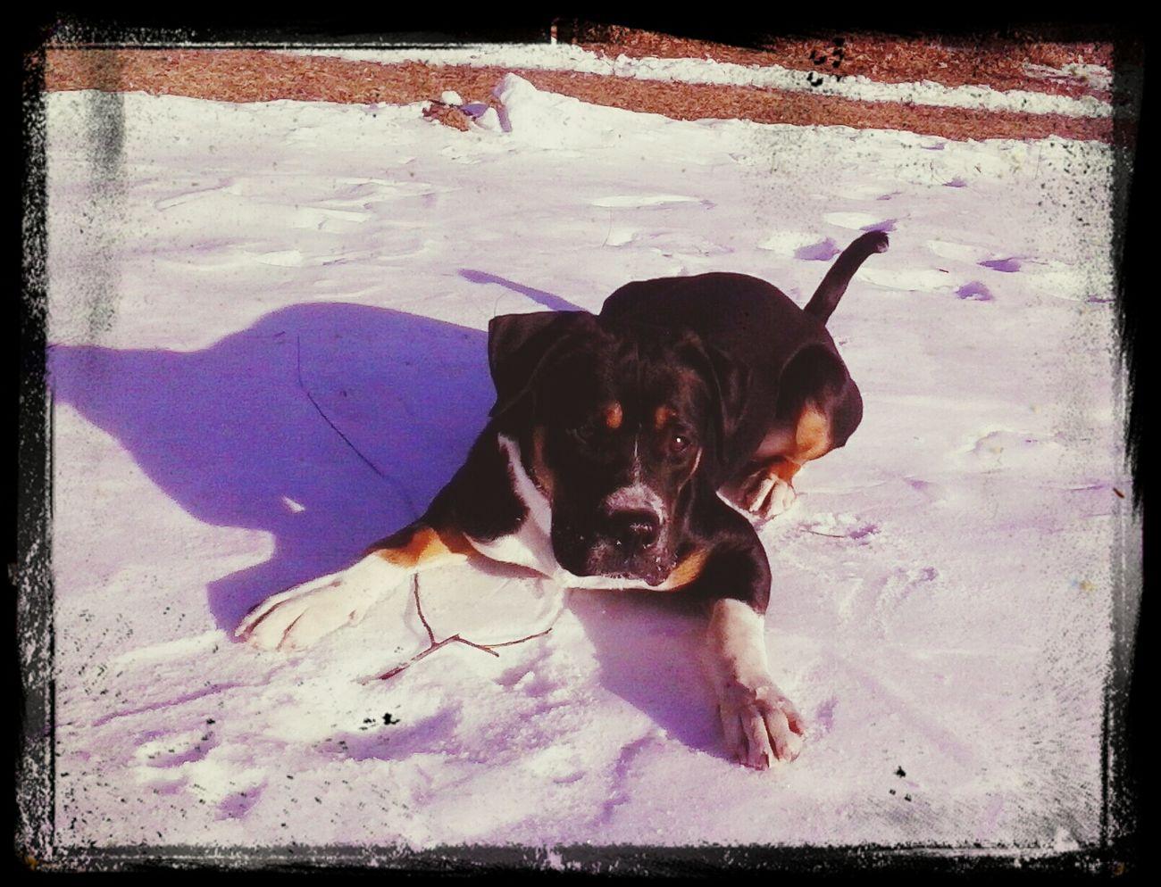 Love My Boy I Love My Dog Mutt Milo