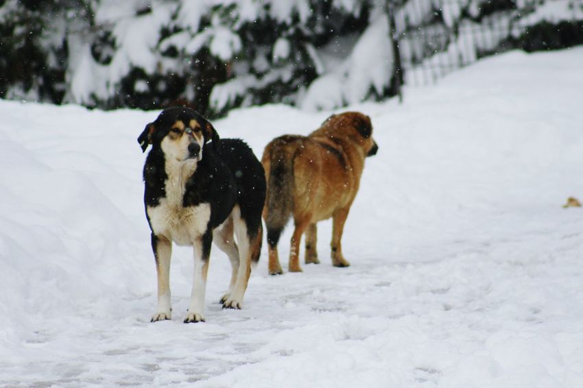 🐶 Dog Winter