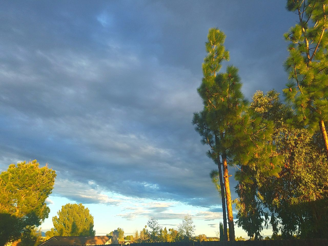 Storm clouds on a sunny day Tree Sky Outdoors Beauty In Nature Day Dramatic Sky Scenics Cloud - Sky Nature Cold Temperature Trees Are Beautiful