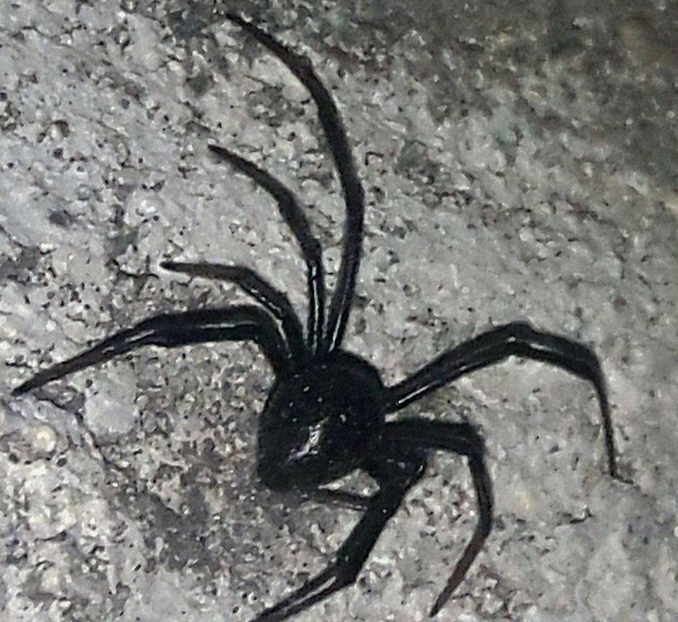 One Animal Animals In The Wild No People Animal Themes Insect Nature Close-up Outdoors Wicked Spider Hanging Out Awesome_shots Check This Out Eyeemphotography Outdoor Photography Night Lots To See Relaxing Almostdie Building Exterior Built Structure