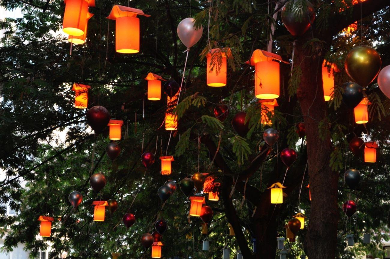 Turkeyphotooftheday Lights Orange - Fruit Tree Moda Balance And Composure Art Candlelight Beautiful ışıklar Turuncumsukirmizi Fener
