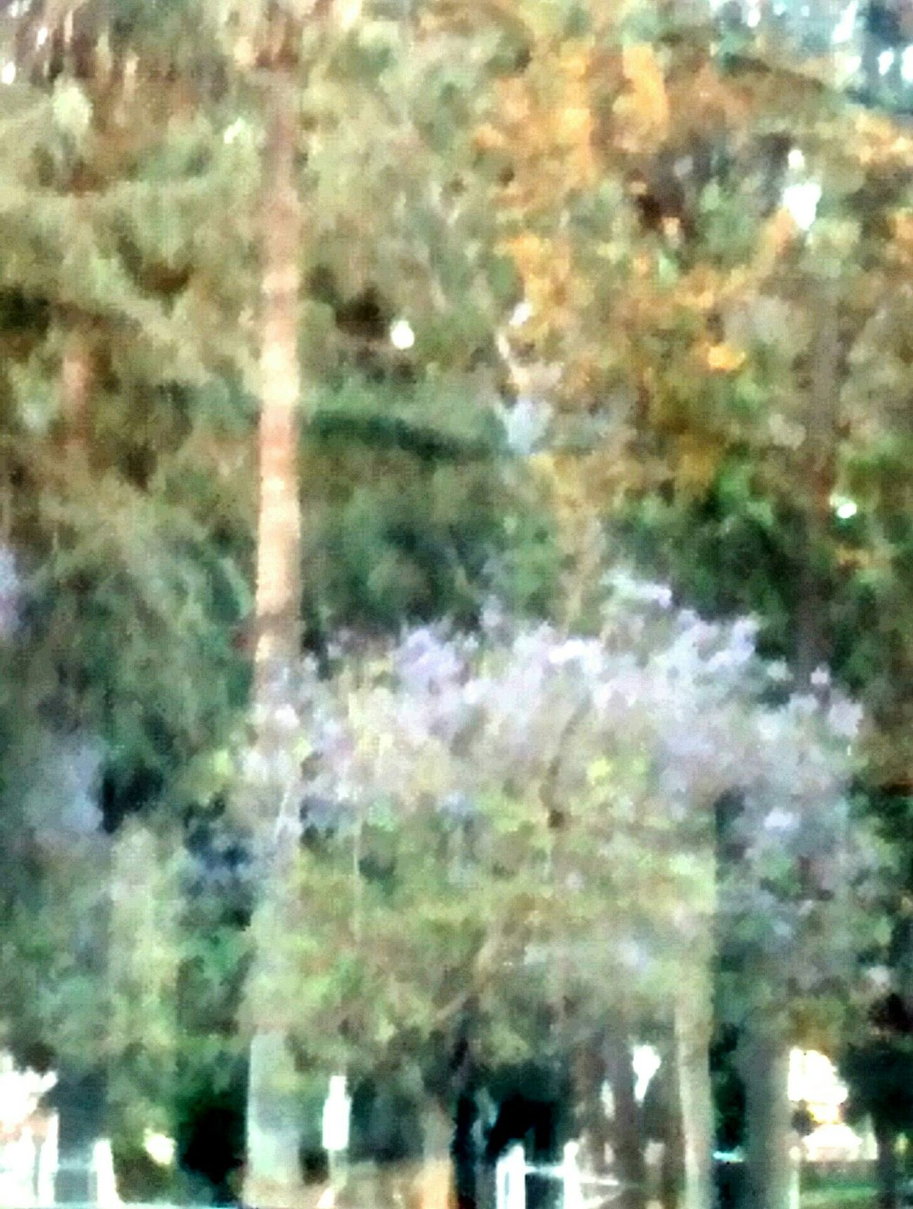 Do you see the various colors of the trees......