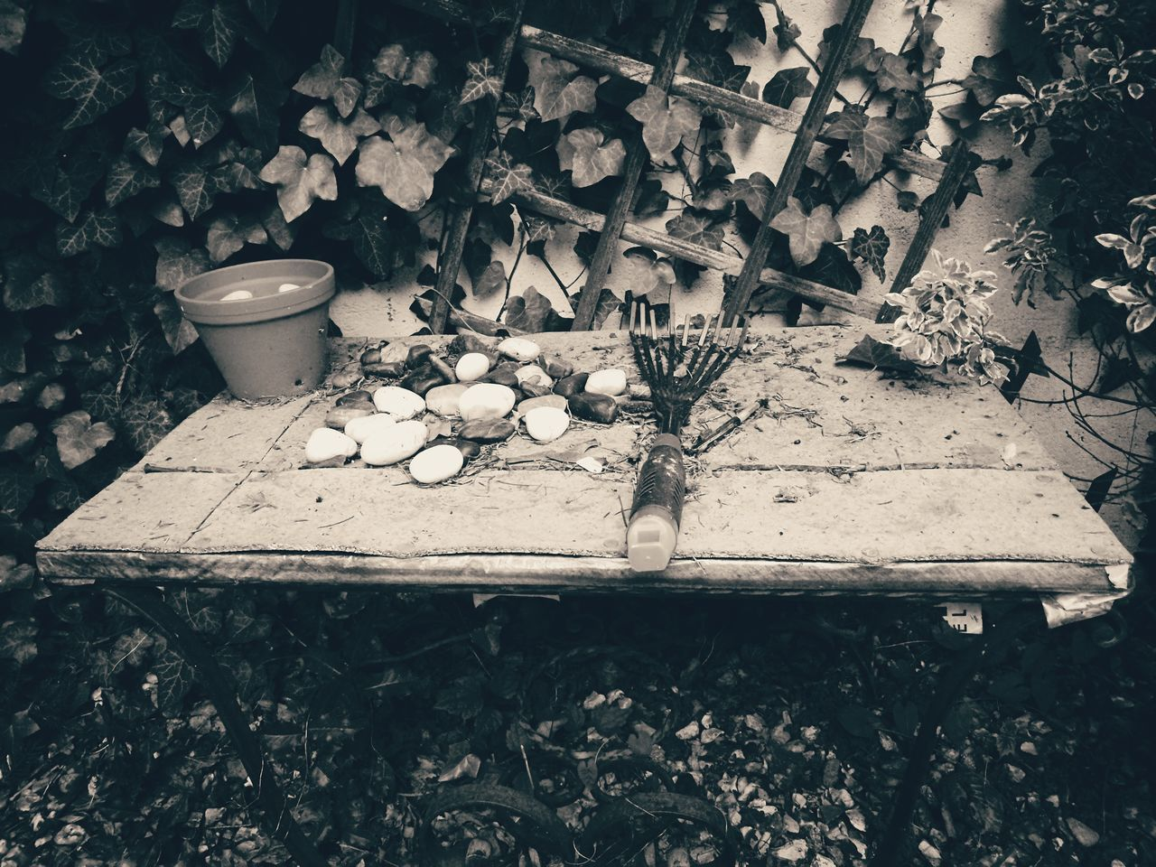 B&w B&W Collection B&W Photo Lifestyle B&WPhoto Monochrome Photograhy Monochrome Collection blackandwhite photography Black&white Garden Tools Plant No People Garden Photography Ivy Leaves Outdoors High Angle View Day Old Oldpicture Oldphoto Leaves 🍁 Stones Growth Leaf Effects In Nature France🇫🇷