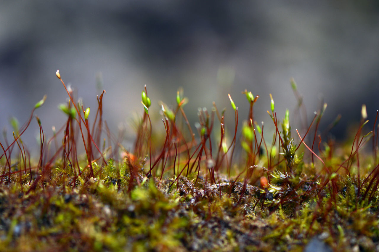 Moss... Nature No People Outdoors Plant Close-up Landscape Growth Day Moss Mossy Part Of Detail Pond Pond Life Simplicity Macro Macro Nature Fragility Botany Growth Beauty In Nature Springtime Microcosm Nature Photography Abundance
