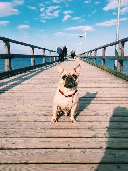 Happy Hugo Dog Beach Frenchbulldog Pug Holiday Usedom Water