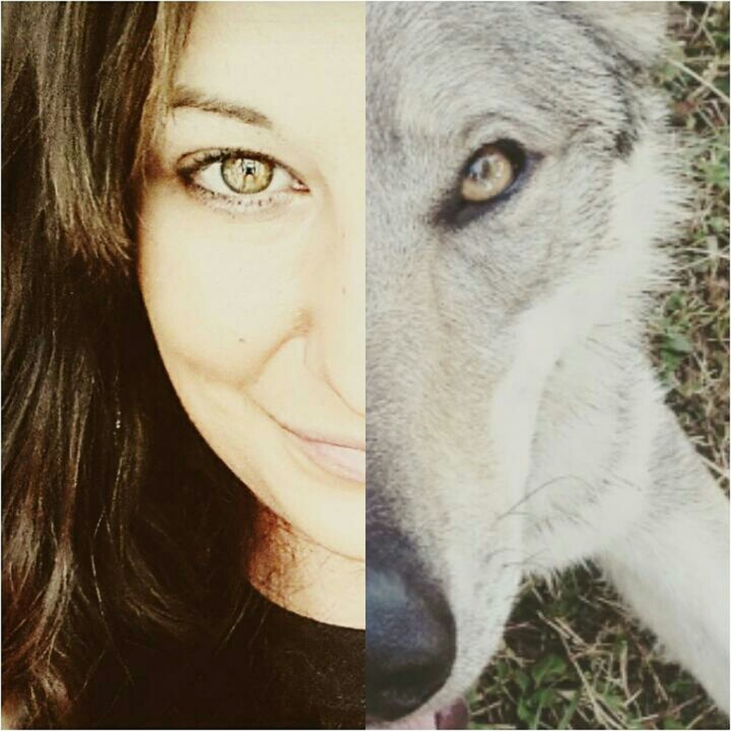 That's Me Cheese! Hello World Cechoslovakianwolfdog Canelupocecoslovacco Lupocecoslovacco Athenawolfdog Czechwolfdog Enjoying Life Eyes