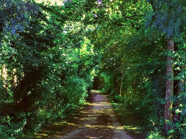 En Balade Paysage Sur Les Chemins Sur Le Chemin Nature Arbres Trees