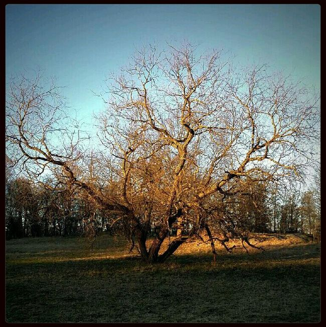Something mystic... Mystic Nature Tree