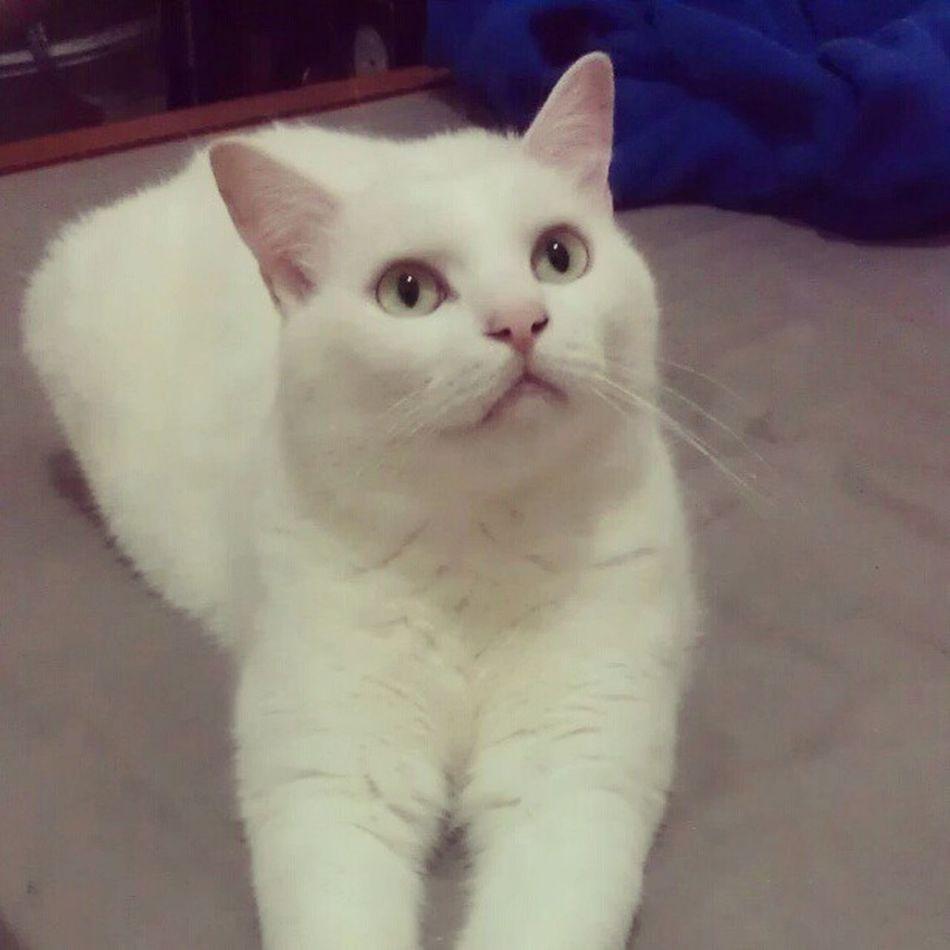 Cat Whitecat Myhairykid