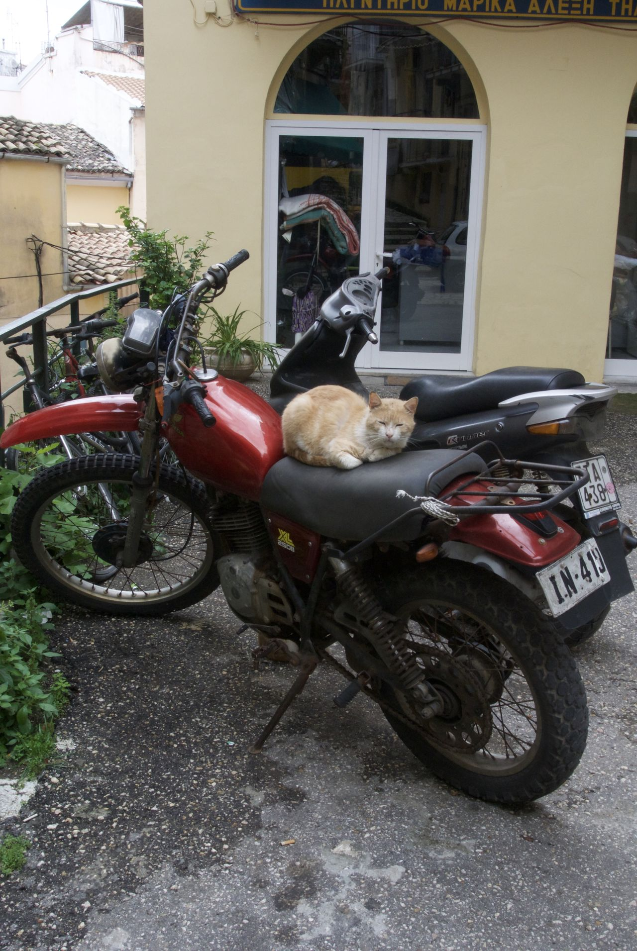 Cats curled up on Motorbike Cats Comfortable Corfu Town Curled Up Day Greek Street Hitching A Ride Land Vehicle Mode Of Transport Motorbike Outdoors Parked Parking Stationary Street Photography Street Scene