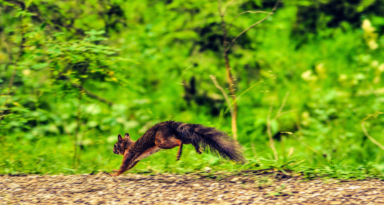 Beautiful stock photos of squirrel, Animal Themes, Animals In The Wild, Beauty In Nature, Day
