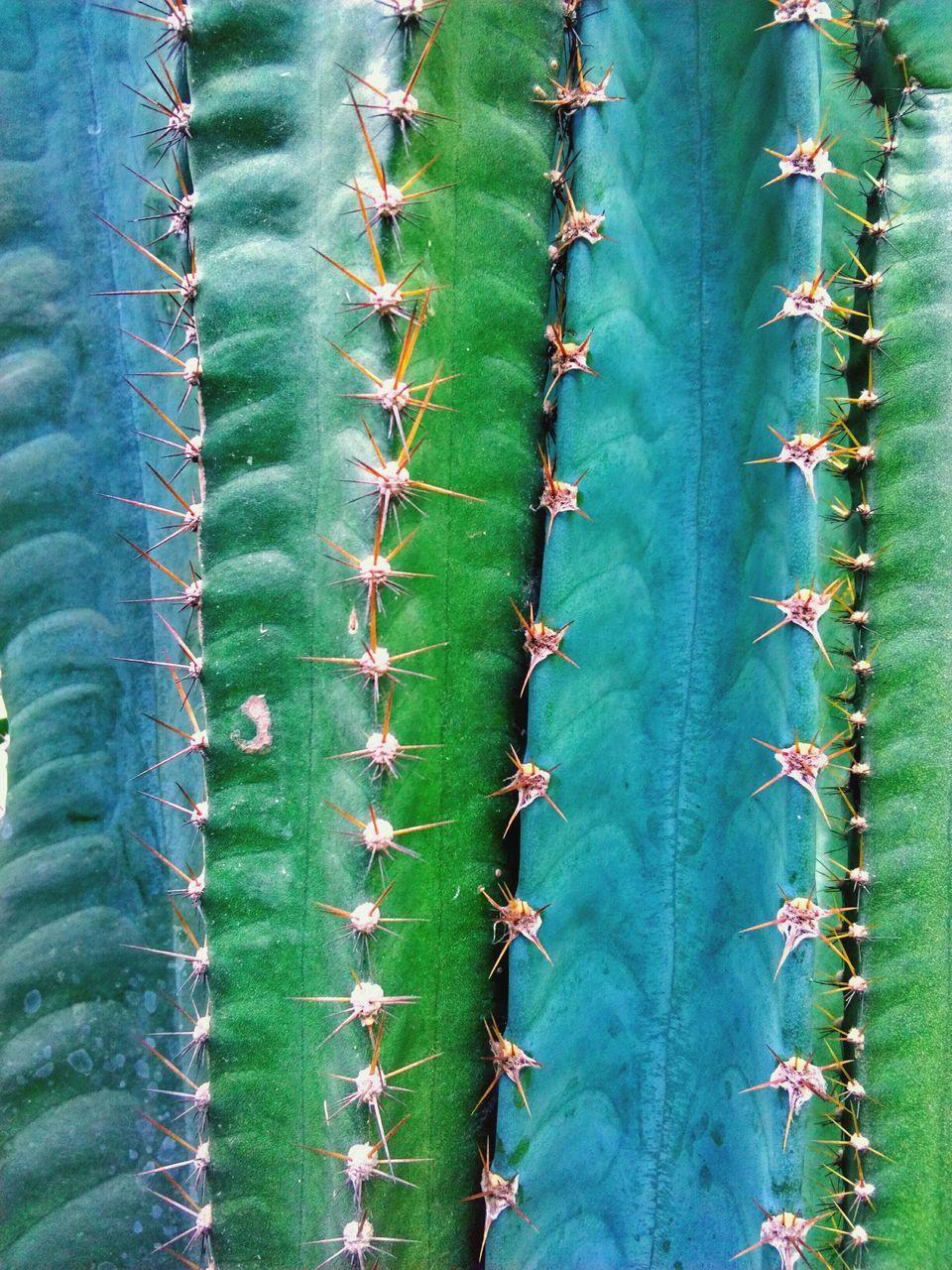 Detail Shot Of Cactus Plant