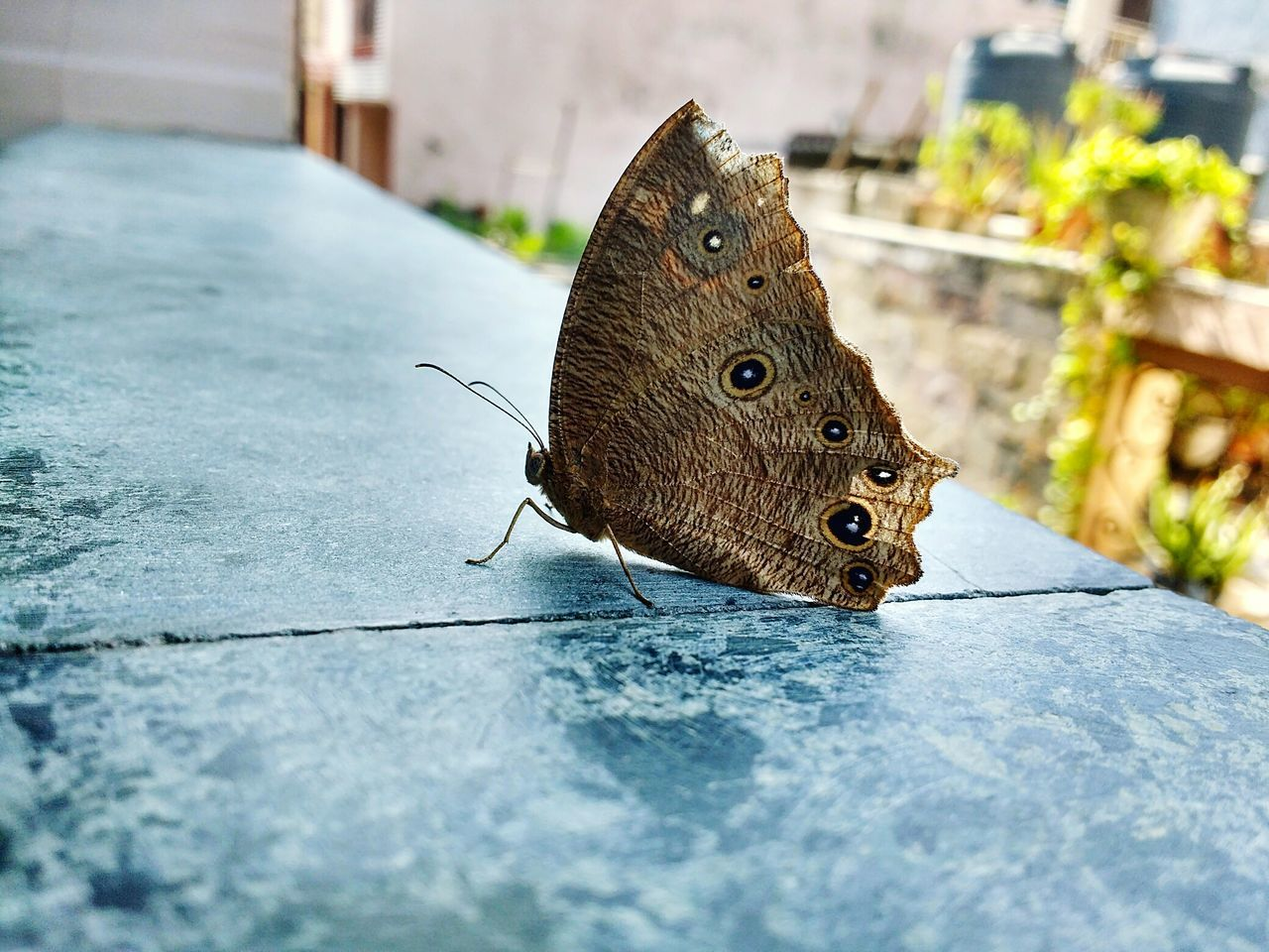 animals in the wild, insect, one animal, animal themes, butterfly - insect, close-up, day, no people, animal wildlife, butterfly, outdoors, nature