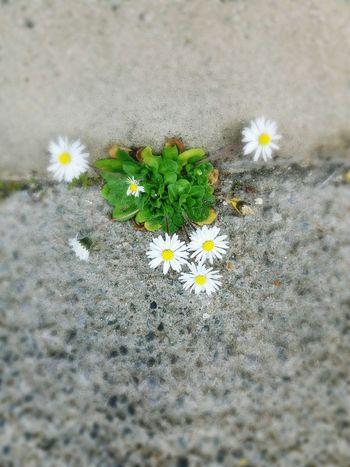 Nature On Your Doorstep Flowers In Bloom Walls