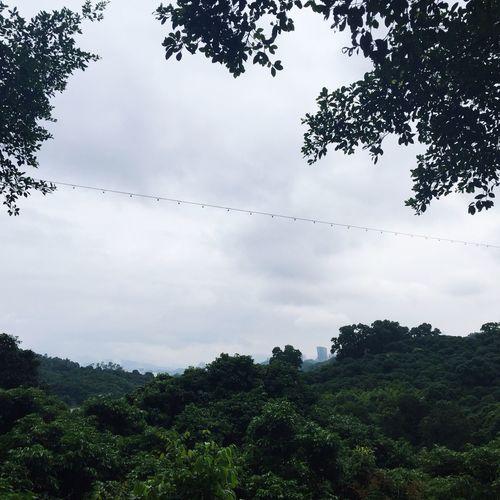 Tree Climb Mountain S K Y First Eyeem Photo