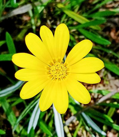 Flower Yellow Petal Nature Fragility Flower Head Plant Beauty In Nature Growth Outdoors Day Close-up No People Neon Life Perfect Imperfection Mind The Gap Paint The Town Yellow