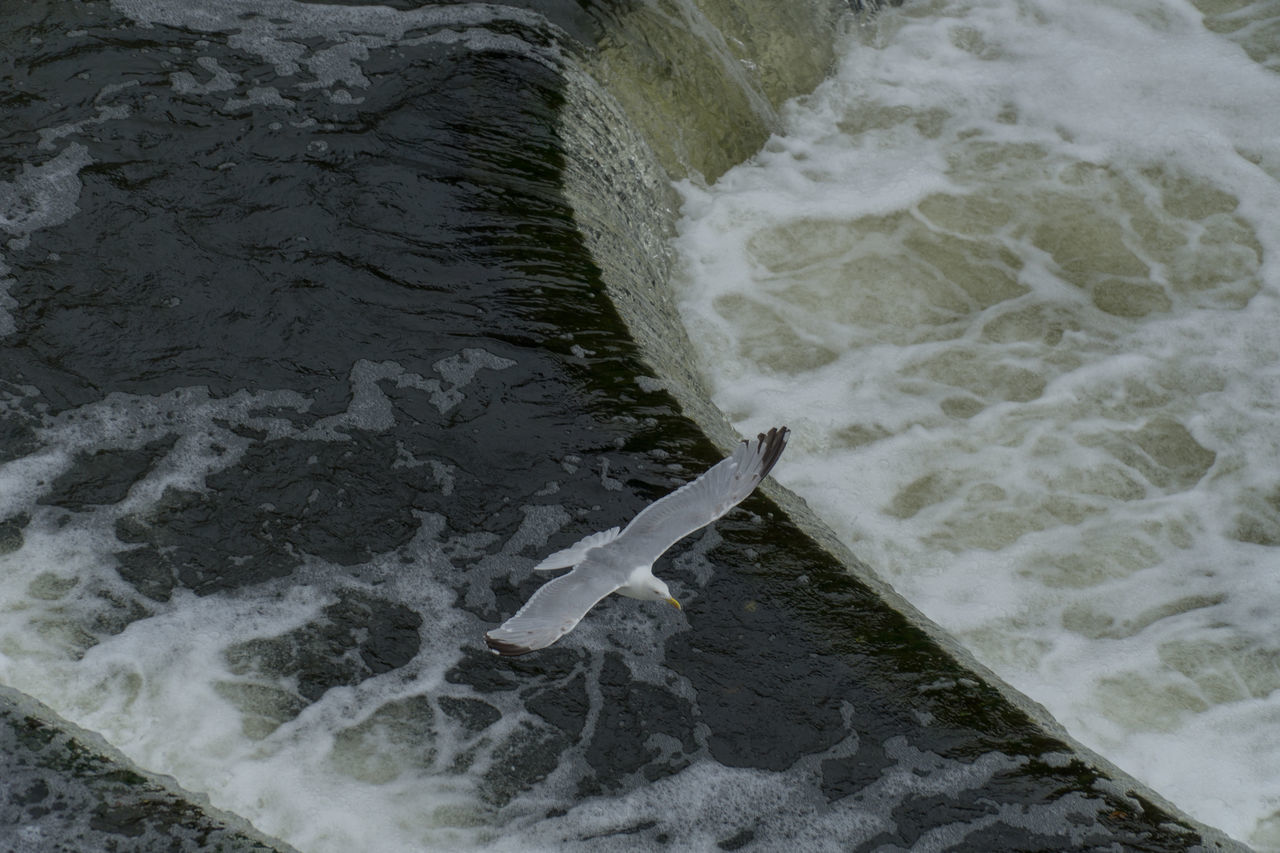 Weird Animal Themes Beauty In Nature Day Foaming Grey Gull Gull High Angle View Motion Nature No People Outdoors River Sea Seagull Turbulent Water Wave