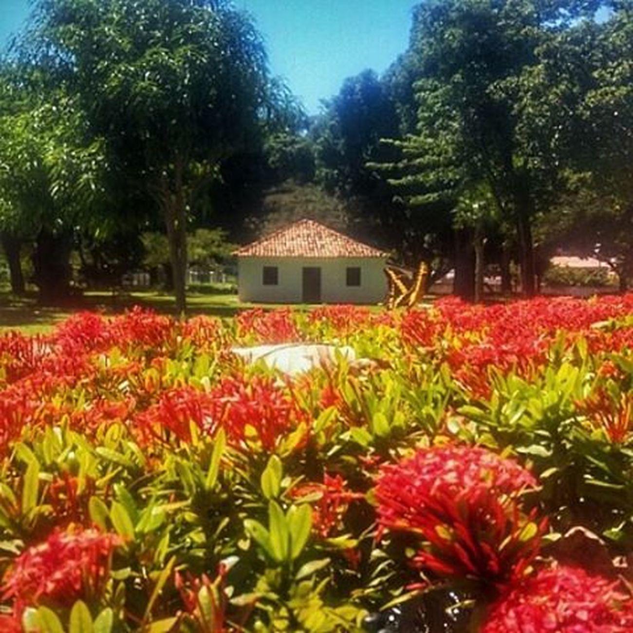 Casa José de Alencar Dnfotografia Fotomissao Photography Loosemag loosefineart Fortaleza Ig_ceara Ceará Amigersbr Amigersbrasil