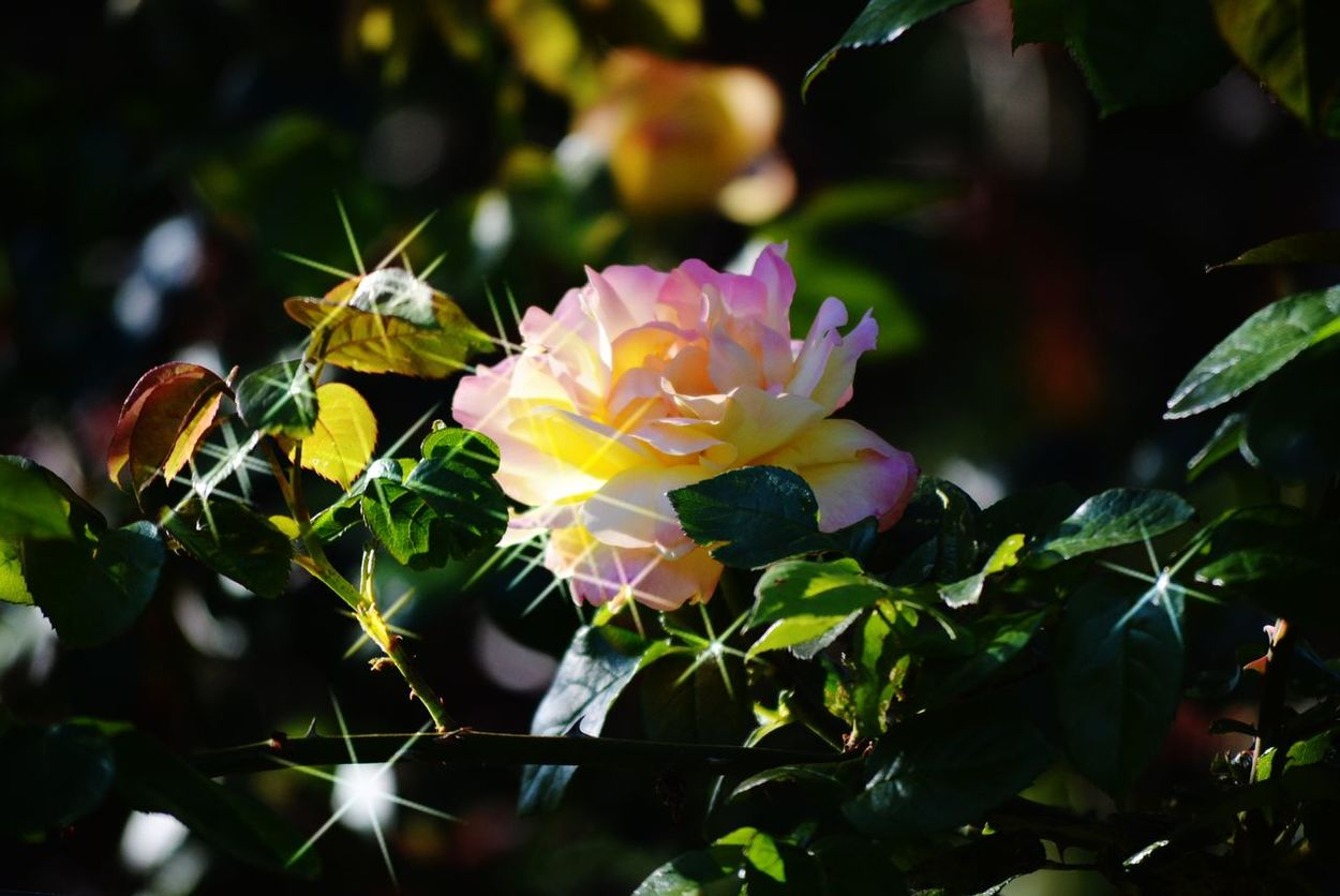 Beauty Of Flowers Family Memories Of Togetherness God's Wonderful Creation Reflection Relaxing Remembering Roses