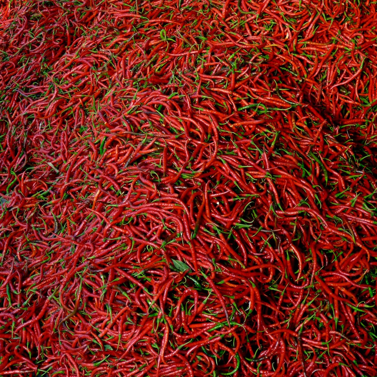 Chili  Close Up Close-up Collection Food INDONESIA Large Group Of Objects No People Pattern Pattern Pieces Pattern, Texture, Shape And Form Red Retail  Variation Chilies Hot