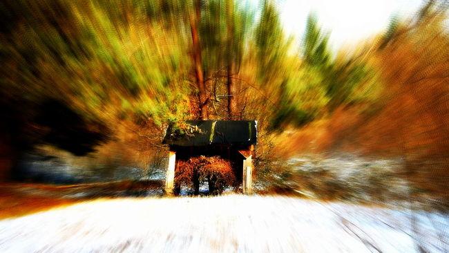 Autumn Collection Autumn Colors Autumn🍁🍁🍁 Cratch Forest Forest Walk Nature Snow Tree