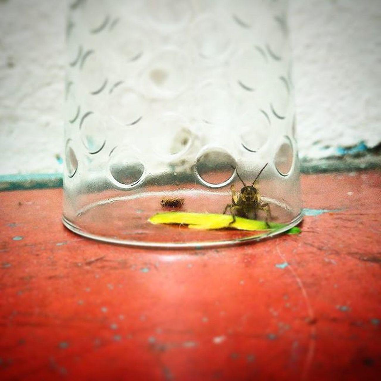 çekirge Böcek özgürlük
