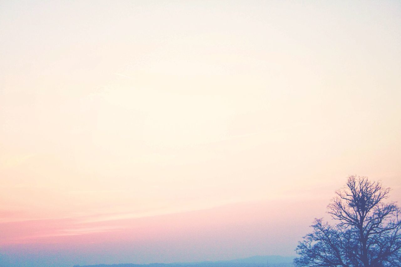 Sunset Cold Romantic Trees Nature Sky Enjoying The View The Calmness Within Negative Space Coral By Motorola