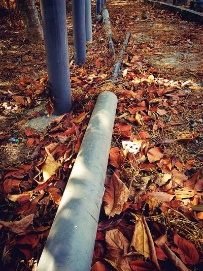 Leaves 🍁 Post My Attempt To Photography Zenfone2laser Zenfone Photography HDR