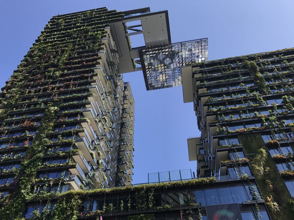 Sydney, Australia, 23rd December, 2016, Adapted to the City Adapted To The City Architecture Blue Sky Building Building And Nature Building And Sky City Glass Building Green Building Mirrior Nature Nature In City No Clouds Outdoor Outdoors Outside Sky
