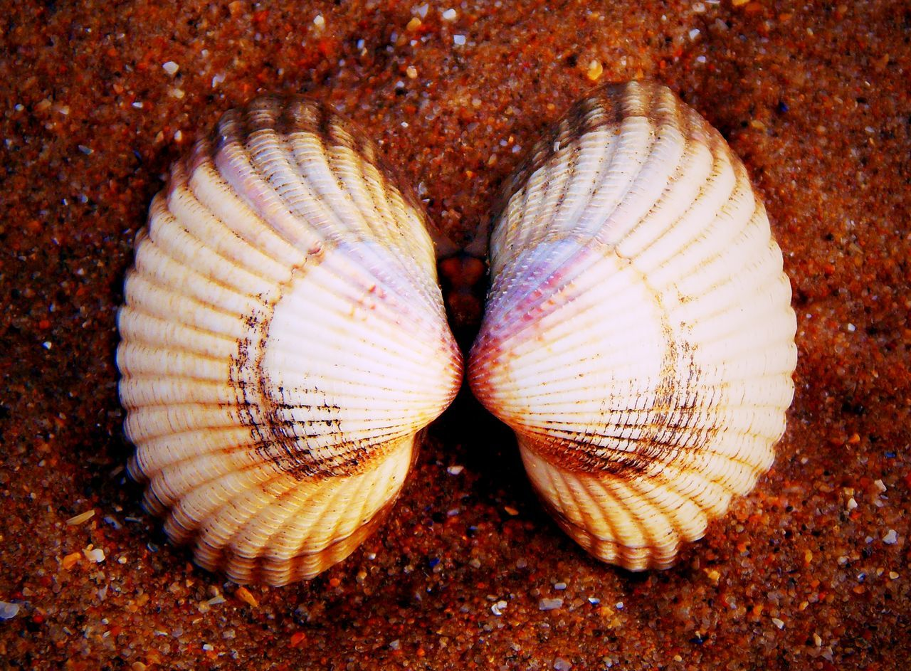 Beauty In Nature Beauty In Nature Close-up Gower Gower Coast Gower Peninsular South Wales Gowercoast Gowerpeninsula Linked On The Beach Oxwich Oxwichbay Shell Beach Shell Collection Shell Photography Shells Shells🐚 Two Is Better Than One Two Of A Kind Wales Wales UK Walesonline