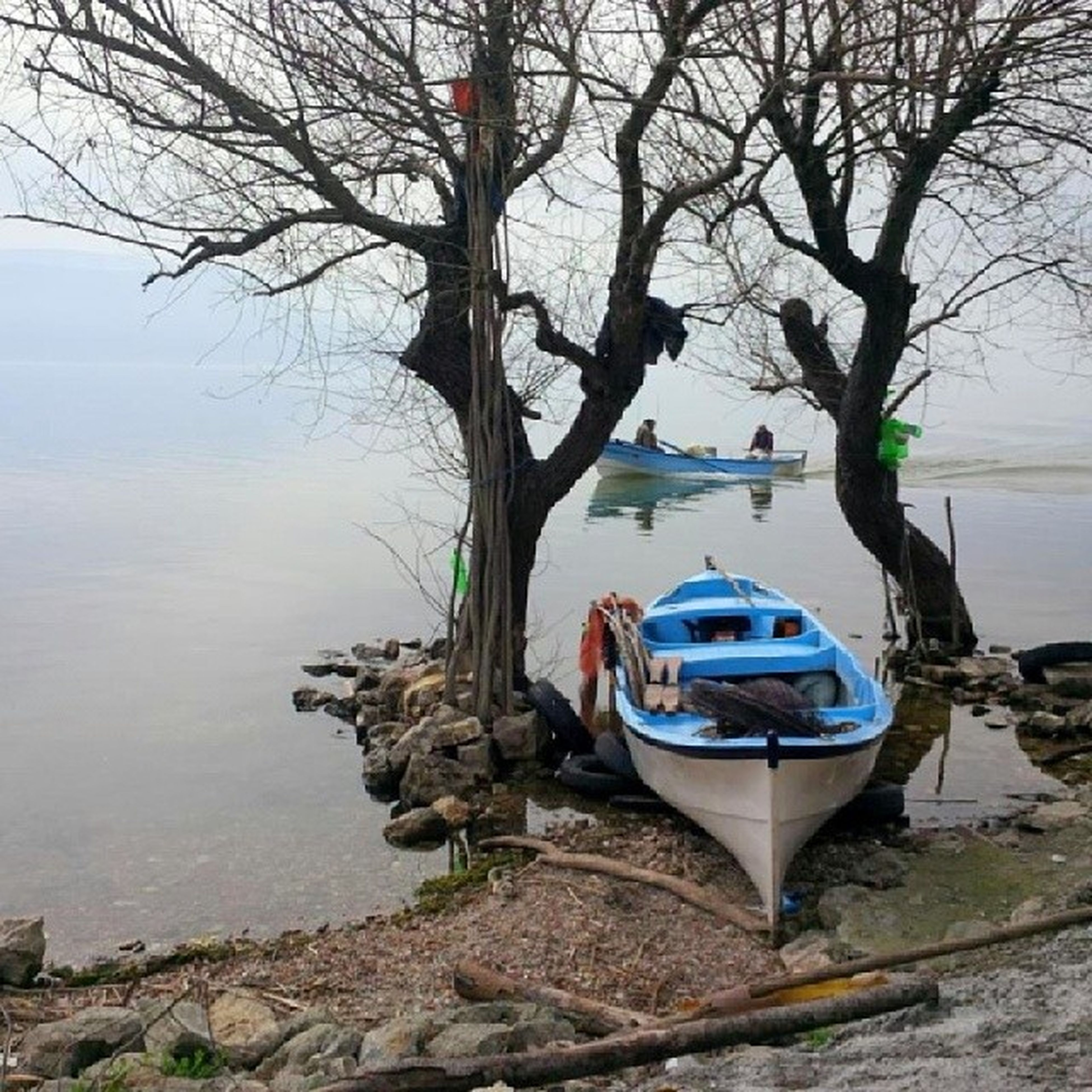 water, nautical vessel, boat, bare tree, transportation, tree, mode of transport, moored, sky, branch, lake, nature, day, tranquility, river, outdoors, tree trunk, riverbank, tranquil scene, reflection