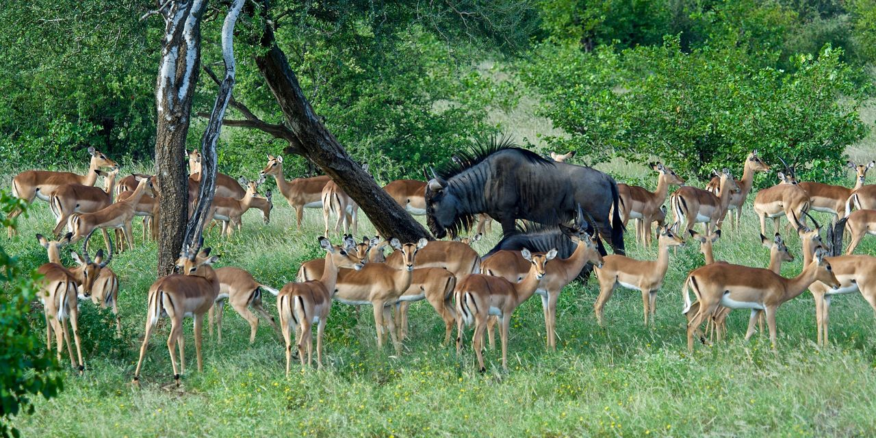 animals in the wild, animal wildlife, tree, animal themes, grass, mammal, deer, nature, day, herd, antelope, outdoors, field, no people, large group of animals, standing, grazing, growth, stag