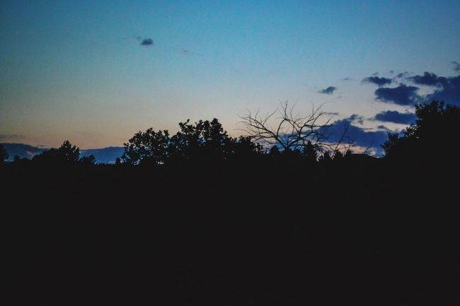 Sunset Colorado Silohette Trees