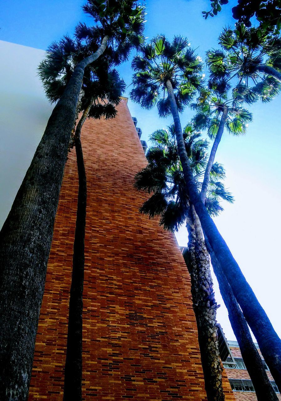 tree, palm tree, tree trunk, low angle view, sky, no people, growth, blue, built structure, day, nature, outdoors, architecture, beauty in nature